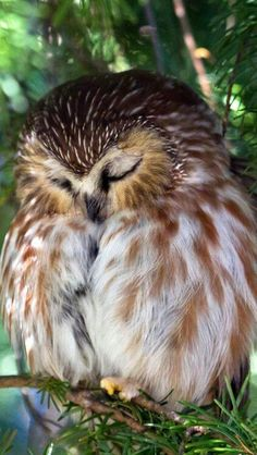 Meditating owl maybe?