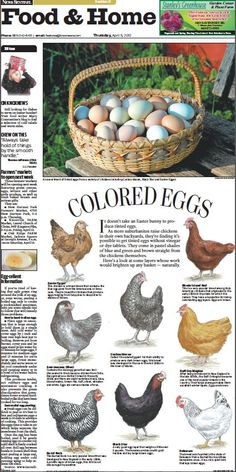 Knoxville News Sentinel artist Don Wood created this design for our Food & Home front today about the variety of colored eggs produced by different breeds of chickens. Wood drew each chicken by hand. #PurelyPoultry