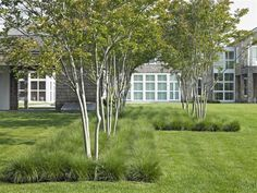 Landscape Focused: landscape, garden design, green