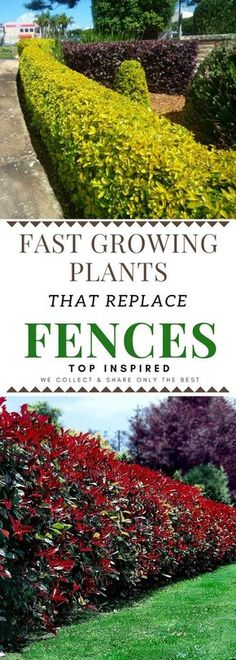 Front Yard Landscaping Beautiful Plants You Can Grow Instead Of A Fence - 101 Gardening Fence Plants, Garden Shrubs, Landscaping Plants, Shade Garden, Landscaping Ideas, Luxury Landscaping, Landscaping Software, Boarder Plants, Privacy Fence Landscaping