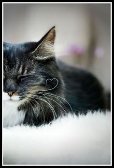 The Cat with The Heart-Shaped Whisker | Content in a Cottage