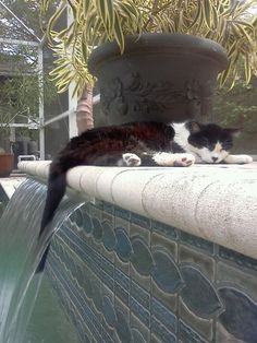 Pool Cat ~ must be very hot...