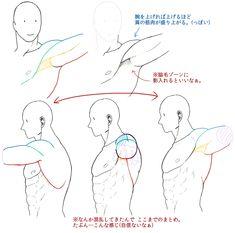 Chest, torso, arms