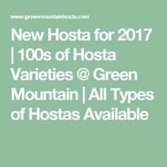 New Hosta for 2017 | 100s of Hosta Varieties @ Green Mountain | All Types of Hostas Available