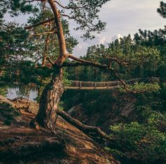 Many national parks have nature trails and in most parks there are rental cabins and unlocked huts where anyone can stay. Photo by Kaapo Valkeavirta from Repovesi National Park, Finland What Is Like, Pathways, Amazing Nature, Trail, Beautiful Places, National Parks, Hiking, City, World