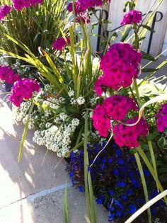 Tucson winter flowers @ La Encantada