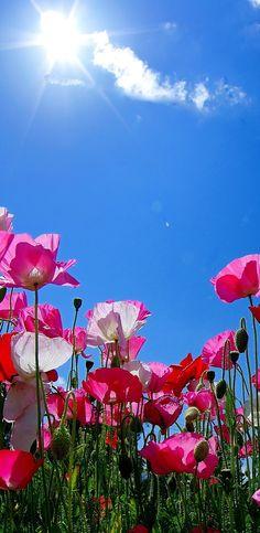 A vida é linda! Mesmo em meio de tantas dificuldades, Deus nos quer felizes. Eu vivo para contar essa notícia.  Padre Fábio de Melo