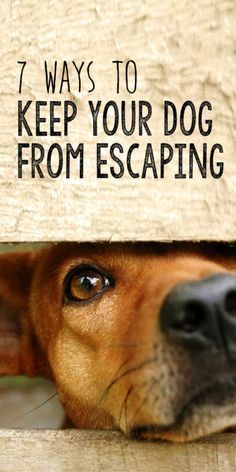 Your dog is one of your most beloved family members, and the thought of losing him or her is heartbreaking. Luckily, there are steps you can take to prevent your dog from escaping out of the yard. Check out eBay to see how you can keep your canine friend safe and sound.