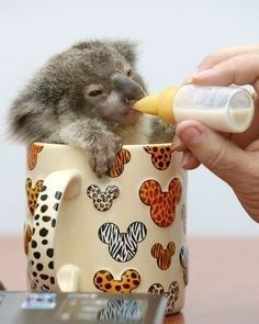 15 Baby Animals Getting Fed By A Bottle