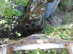 Une voie de randonnée pédestre avec son échelle aménagée #sentier #rando #chemin #foret #GR #PR #marche #nature Trunks, Nature, Plants, Paths, Pathways, Walking, Drift Wood, Naturaleza, Tree Trunks