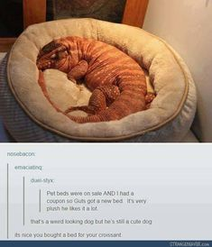I'm sorry... but... when someone looks at a giant scaly lizard and calls it a croissant... I just can't... I can't ignore that.