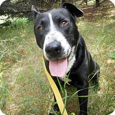 Palmyra, NE - Border Collie/Labrador Retriever Mix. Meet Ella, a dog for adoption. http://www.adoptapet.com/pet/16888234-palmyra-nebraska-border-collie-mix