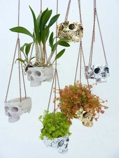 Skulls plants Sobeit Studio