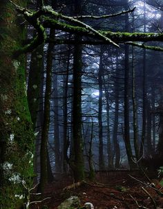 Dark Forest, Attiki, Greece photo via zachariah