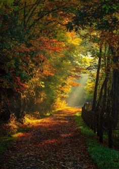 sun on trail by Philip Balko ~ Path of the Flood Trail, Mineral Point, Pennsylvania**
