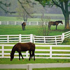 Lexington, KY on a budget. From Southern Living Magazine.