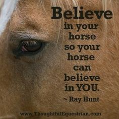 Cute Horse Quotes, Inspirational Horse Quotes, Horse Riding Quotes, Cute Horses, Beautiful Horses, Funny Horse Sayings, Horse Story, Equestrian Quotes, Horse Posters
