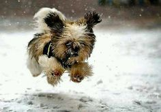Happiness is a puppy - Charles M. Schultz.