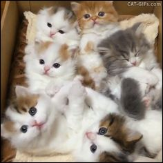 KITTEN GIF • Cuteness overload - Aww Bouquet of 6 fluffy balls chilling in a box