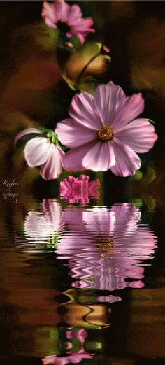 pink flower reflection!