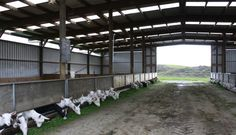 #goatvet likes this website about shed for dairy #goat housing in New Zealand. Great ventilation and light