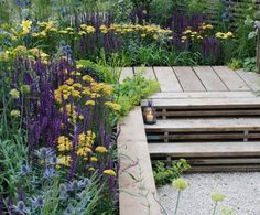 Salvia 'Ostfriesland', thistle-like Eryngium 'Sapphire Blue', pompom-flowered Allium caeruleum 'Azureum', and the gold Achillea 'Credo' Perfect Plants, Cool Plants, Green Plants, Prairie Planting, Planting Plan, Hampton Court Flower Show, Narcisse, Sloped Garden, Garden Show