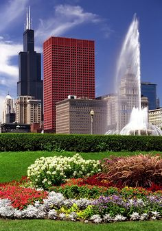 Chicago - Grant Park Flowers & Sears Tower