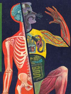 Cornelius De Witt, cover for Mitchell Wilson's The Human Body: What it is and how it Works, 1959