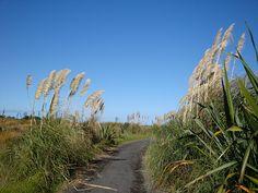 Taurangi Beach