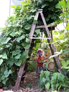 Bean teepee; old ladder, easy. (1) From: Organic Gardening, please visit