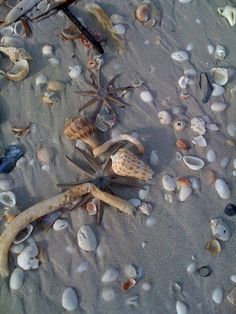 Starfish on Sanibel. The island has cool tide pools and shelling. Sanibel Island Shells, Captiva Island, Sea Shells, Florida Travel, Florida Beaches, Clearwater Florida, Sarasota Florida, Beach Travel, Fort Myers Beach