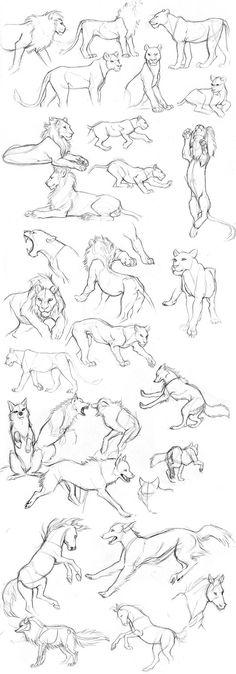 http://www.deviantart.com/art/Animal-sketches-545504276