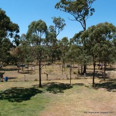 eight acres: planning a property using permaculture. What to do first? Nothing but observe!