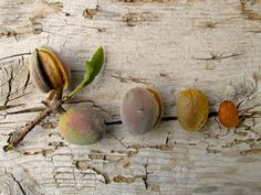 Almonds, from branch to ready to eat.