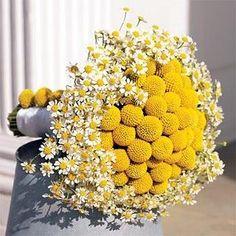 Un bouquet giallo di craspedia