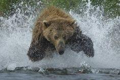 Art Wolfe, notre photographe coup de coeur du jour a su capter l'instant décisif ! http://artwolfe.com/collection/decisive-moment/