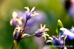 Blumen im Sonnenlicht - freestockgallery.de