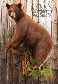 Cletes Taxidermy Studio