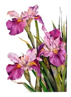 цветы акварель: 21 тыс изображений найдено в Яндекс.Картинках