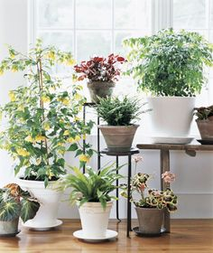 Indoor Plants Can Be Used As Useful Visual Aids At Shopping