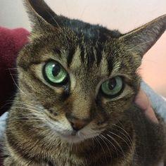 ご機嫌アイさん#catsagram #catstagram #lovelycat #neko #cutecats #cat_of_the_day #cat_of_world #catlovers #lovelycat #follow4follow #like4like #猫 #ねこ