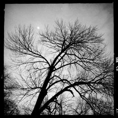 Moonbeams and howling / winds vied for dominance of  / a cold spring twilight.