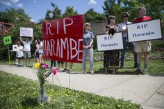 Animal rights activists and mourners gather for a Memorial Day vigil  outside the Cincinnati Zoo & Botanical Garden, Monday, May 30, 2016 in Cincinnati for Harambe, the gorilla killed Saturday at the Cincinnati Zoo after a 4-year-old boy slipped into an exhibit and a special zoo response team concluded his life was in danger. There has been an outpouring on social media of people upset about the killing of the member of an endangered species.  (AP Photo/John Minchillo)