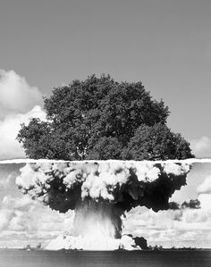 killer trees