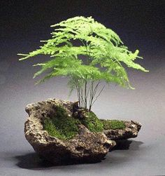 Bonsai More Pins Like This At FOSTERGINGER @ Pinterest