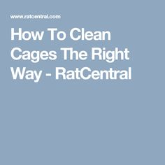 How To Clean Cages The Right Way - RatCentral
