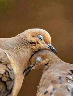 """""""O GRITO DO BICHO"""": Imagem do dia: rolinhas e o amor"""