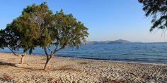 Der Strand von Tigaki auf Kos