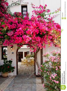 Pink Bougainvillea  - Download From Over 26 Million High Quality Stock Photos, Images, Vectors. Sign up for FREE today. Image: 22602696