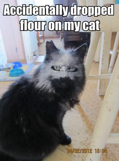 I'm not sure why I laughed so hard at this... accidentally dropped flour on cat